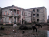 Abkhazia - Gali: horses in the ruins of a school - photo by A.Kilroy