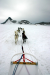 Alaska - Skagway: Denver Glacier - on a dogsled (photo by Robert Ziff)