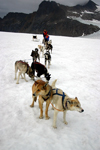 Alaska - Skagway: Denver Glacier - dogs and dogsled (photo by Robert Ziff)