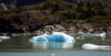 Alaska's Inside Passage - Tracy Arm Fjord : small iceberg (photo by Robert Ziff)