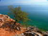Lin, Pogradec, Kor�� county, Albania: view over lake Ohrid - photo by J.Kaman