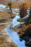 Biskra, Algeria / Alg�rie: Oued El Abiod - stream and palm trees - photo by M.Torres | Oued El Abiod - chenal superficiel et palmiers
