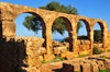 Tipaza, Algeria / Alg�rie: arches and olive tree - Great Christian Basilica - Tipasa Roman ruins, Unesco World Heritage site | arcade et olivier - Grande Basilique Chr�tienne - ruines romaines de Tipasa, Patrimoine mondial de l'UNESCO - photo by M.Torres