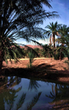 Algeria / Algérie - Droh - wilaya de Biskra: small pond in the oasis - photo by C.Boutabba