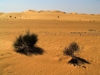 Algeria / Algerie - Sahara desert: shrubs and sand dunes - photo by J.Kaman