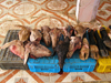 Algérie - Ouargla / Wargla: goats heads for sale in the market - photographie par J.Kaman