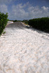 Cove Pond, West End Village, Anguilla: natural white foam covers the road to road to Cap Juluca - Anguilla's 'snow' - photo by M.Torres