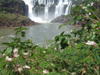 Argentina - Iguazu Falls - falls and vegetation - images of South America by M.Bergsma