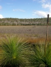 Australia - Fraser Island (Queensland): swamp along Woralie road - photo by Luca Dal Bo