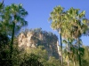 Australia - Carnarvon Gorge NP (Queensland): walk to the Cathedral - photo by Luca Dal Bo