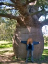 Roma (Queensland): huge bottletree - baobab (photo by Luca Dal Bo)
