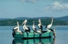 Australia - Myall Lakes (NSW): pelicans gather on a rowboat - photo by Rod Eime