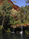 590 Western Australia - Karijini National Park: Fern Pool, Dales Gorges - falls - photo by M.Samper)
