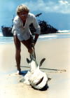 Australia - Fraser Island (Queensland): man and shark - photo by Air West Coast