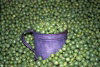 Austria - D�rnstein in der Wachau (Niederosterreich): peas in an old world shop - Erbse - Pisum sativum - ervilhas (photo by F.Rigaud)