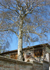 Sheki / Shaki - Azerbaijan: Sheki Khans' palace - built in 1797 by Muhammed Hasan Khan - view from outside the wall - large tree - photo by N.Mahmudova