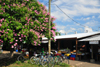 Belmopan, Cayo, Belize: market square - stalls, bikes and flowering tree - photo by M.Torres