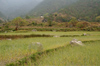 Bhutan - fields, on the way to Khansum Yuelley Namgyal Chorten - photo by A.Ferrari