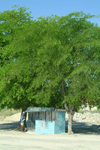 Maun, North-West District, Botswana: phone box, Botswana style - metal hut under the tree shade - photo by J.Banks