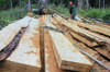 Brazil / Brasil - Amazonas: logging operation in the Amazonia - Castanheira wood - madeireiros (photo by M.Alves)