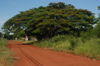 Brazil / Brasil - Dourados: tree on the road to the city / arvore (photo by Marta Alves)