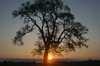 Brazil / Brasil - Dourados: tree at sunset / pôr-do-sol - arvore (photo by Marta Alves)