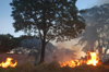 Brazil / Brasil - Dourados: burning bushes in the city / Queimada em lote urbano (photo by Marta Alves)