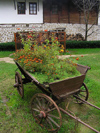 Arbanasi - Veliko Turnovo province: flower cart (photo by J.Kaman)