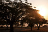 Bujumbura, Burundi: tree silhouettes at sunrise - Bujumbura International Airport - BJM - photo by M.Torres