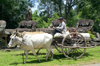 Angkor, Cambodia / Cambodge: Angkor Thom - a farmer, using a traditional ox cart, transports produce and his youngsters past ancient carvings near the South Gate - photo by R.Eime