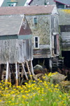 Canada 380 Old wooden house on stilts at low tide near Peggy's Cove, Nova Scotia, Canada - photo by D.Smith
