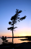 Canada - Ontario - Lake Huron: St. Joseph Island - tree and horizon- photo by R.Grove