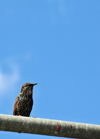 Toronto, Ontario, Canada: bird rests on a traffic light structure - photo by M.Torres