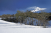 Villarrica Volcano National Park, Araucanía Region, Chile: smoking Villarrica volcano and snowy landscape in the Lake District of Chile - photo by C.Lovell