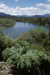 Ais�n , Chile: river along the Camino Austral, a dirt road but the main route in northern Patagonia - rhubarb - photo by C.Lovell