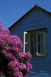 Santa Virginia, Valdivia, Los Ríos, Chile: purple rhododendron and blue house – village in the Rio Calle Calle valley - photo by C.Lovell