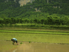 221 China - Yangshuo - (Guilin, Guangxi Province): peasant works on a rice field (photo by M.Samper)