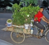 China - Sichuan Province: Chengdu: mobile garden(photo by  G.Frysinger)