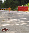 42 Christmas Island: Red Crabs & road closed sign (photo by B.Cain)