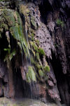 Christmas Island: waterfall in the island's interior (photo by Bill Cain)