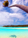 Cook Islands - Aitutaki atoll / Araura / Ararau / Utataki: palm tree bends over the water - photo by B.Goode