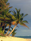 Cook Islands - Rarotonga island: palm tree on Titikaveka beach - photo by B.Goode