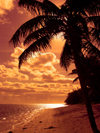 Cook Islands - Rarotonga island: Beautiful Pink Sunset - beach and palm silhouette - photo by B.Goode