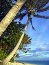 Cook Islands - Aitutaki: coconut trees over the beach - photo by B.Goode