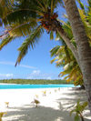 Cook Islands - Aitutaki island: palm tree and beach on One Foot Island / Tapuaetai - palm-fringed beach - photo by B.Goode