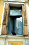 Croatia - Cakovec: black cat on window sill - photo by P.Gustafson