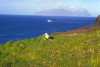 Crozet islands / Iles Crozet - Possession island: looking at the Eastern island / Ile de l'Est -  a wandering albatross chick on its nest (photo by Francis Lynch)