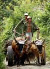 Cuba - Holguín province - ox cart - photo by G.Friedman
