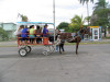 Cuba - Cienfuegos: environmentally correct public transportation - photo by L.Gewalli