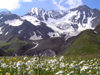 Russia - Dagestan - Tsumada rayon - Addala-Shukhgel'meer mountain: daisies and peaks (photo by G.Khalilullaev)